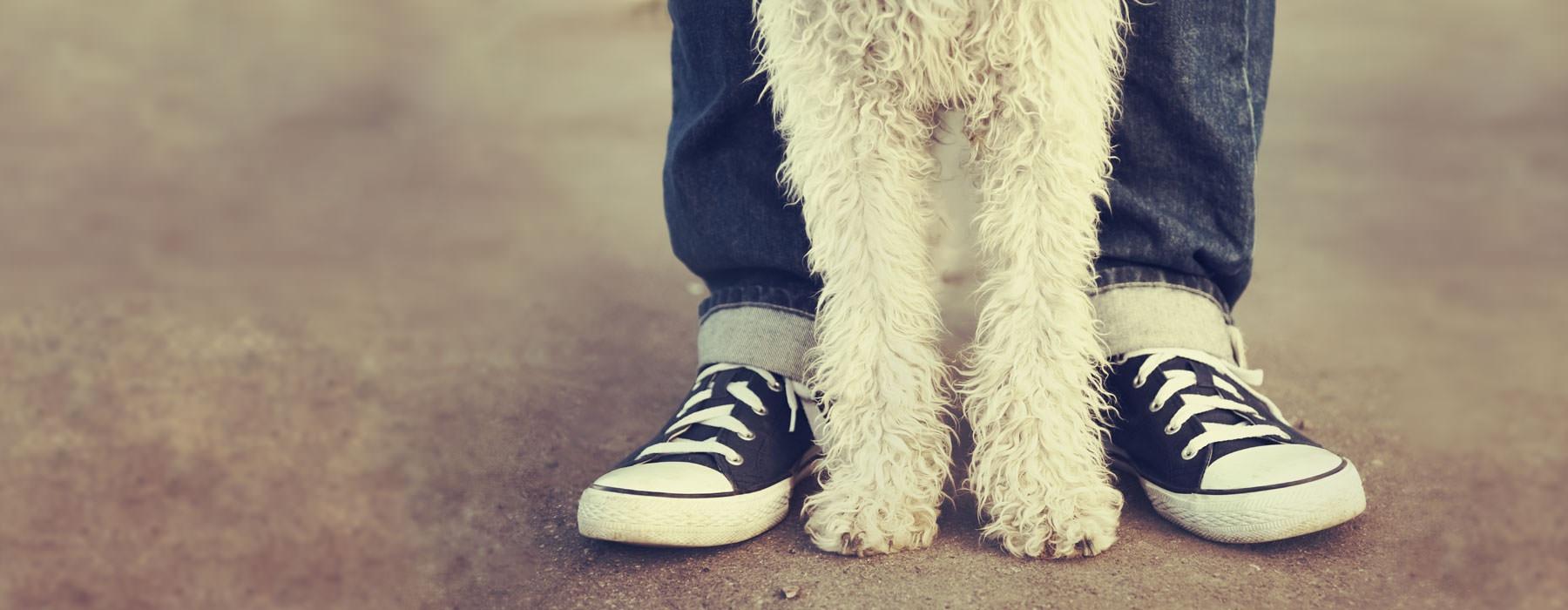 kids feet and dogs feet